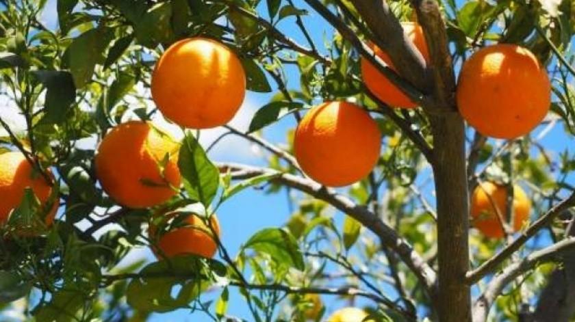 Estudio: Desventajas del jugo de naranja en tu dieta(Archivo)