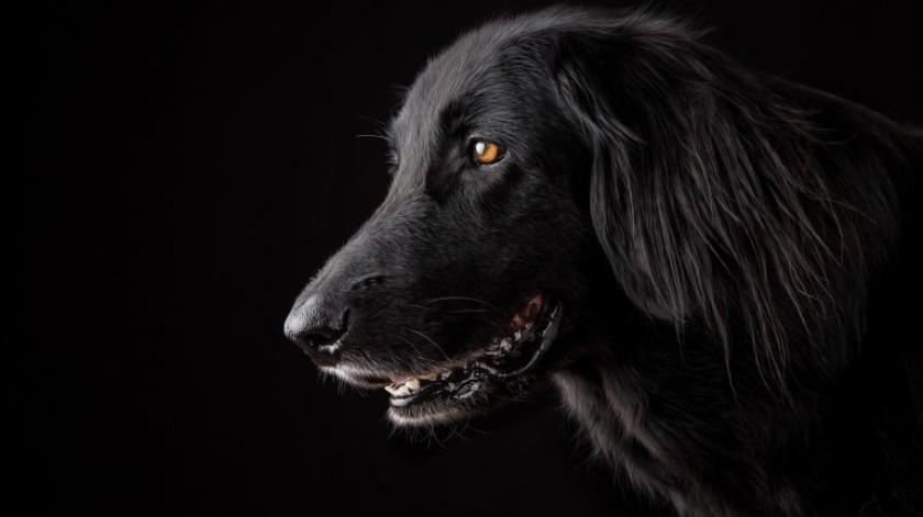 Son los únicos animales que puedenseguir y comprender con éxito los gestos humanos.(Cortesía)