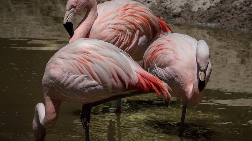 Un flamenco fue sacrificado en el zoológico Miller de Illinois, en Estados Unidos.