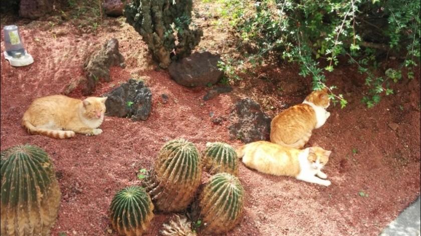 La ciudadana refirió que desde hace cinco años ella atiende personalmente a los felinos.(@Carmen_Hern)