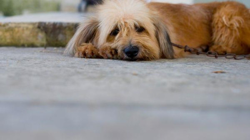 El rescatista de animales llama a la población a poner croquetas y agua a los perros y gatos callejeros, por el intenso calor.(Banco Digital)