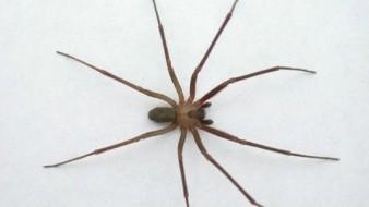 La presencia de las arañas incrementa esta temporada.