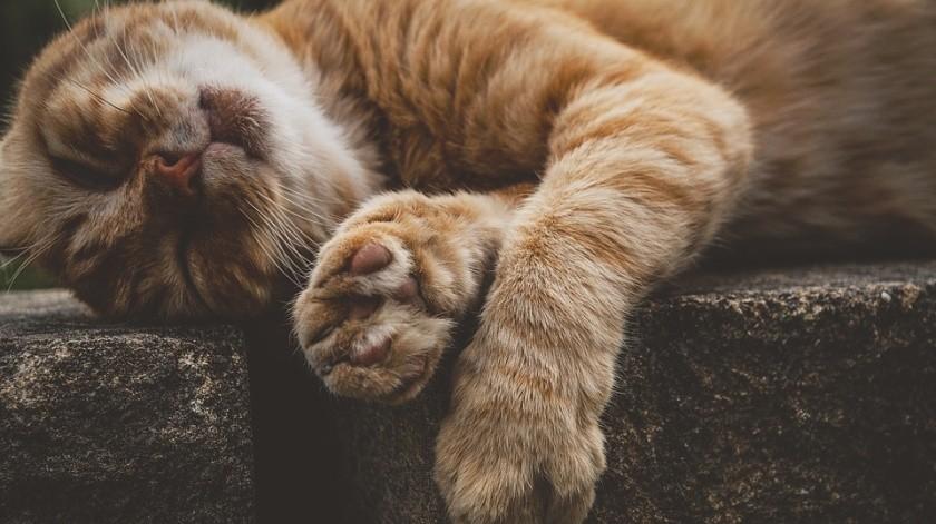 Reportan envenenamiento de mascotas; salvan a uno(Pixabay)