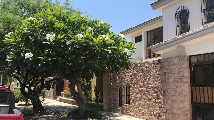 El Ayuntamiento de Cajeme busca promover que se siembre árboles en en Municipio.(Mayra Echeverría)