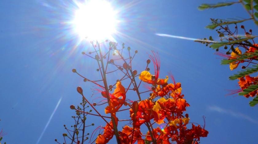 Este viernes inicia de manera oficial la canícula, temporada que es considerada la de mayor calor en el año.(Anahí Velásquez)