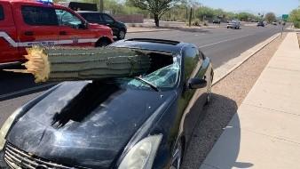 La cactácea atravesó el parabrisas del automóvil por el impacto.