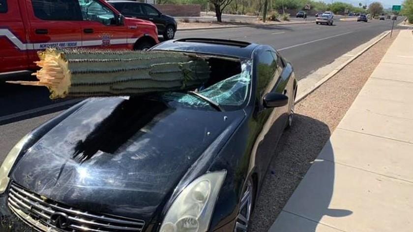 Una parte del saguaro terminó dentro del auto,mientras que el resto se dejó quedó sobre el vehículo.(AP)