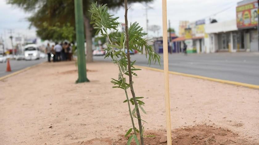 Reforestación del bulevar Solidaridad, entre Ignacio Salazar y Lázaro Cárdenas.(Especial)