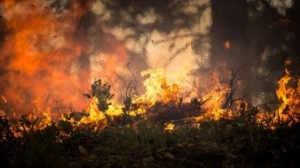 Por altas temperaturas, hay más de 100 incendios en el Ártico