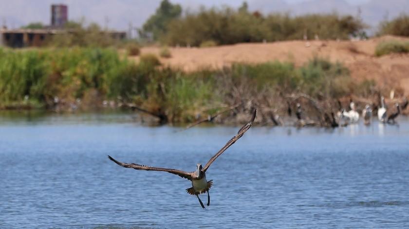 Buscan convertir lagunas en área natural protegida(Víctor Medina)
