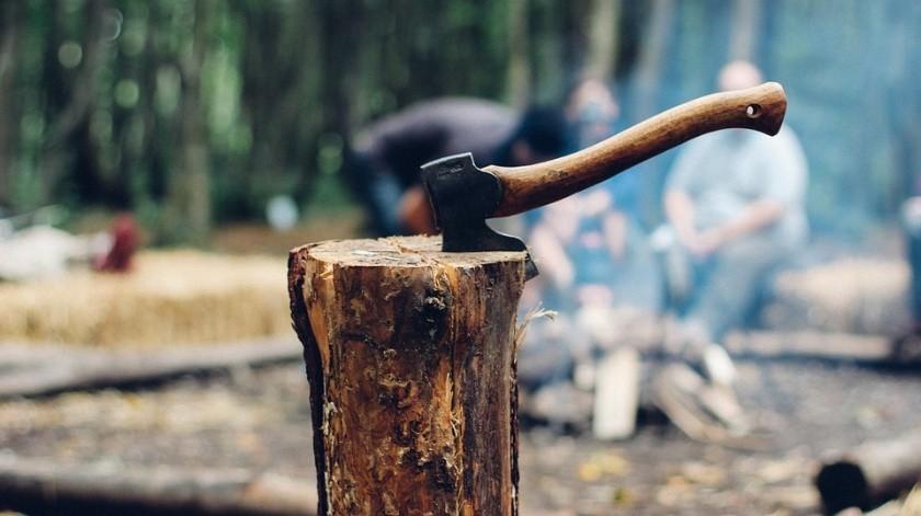 Es probable que las zonas taladas tarden años en recuperarse.(Pixabay)