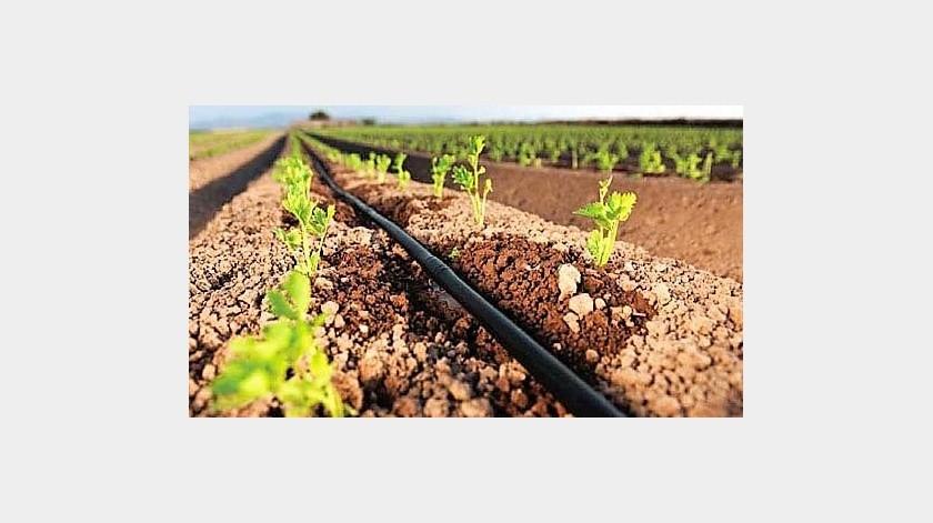 Con el ingreso y la validación de las solicitudes de apoyo que durante el actualejercicio fiscal 2019 ingresaron al Programa de Fomento a la Agricultura y sus diversos componentes se podría generar una derrama económica superior a los $18.3 millones de pesos, en beneficio del sector agropecuario de la zona costa de Baja California.(Cortesía)