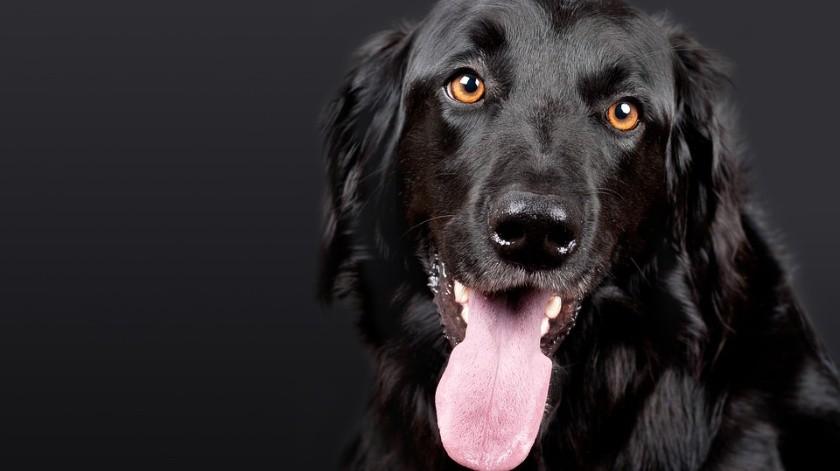 El 21 de julio es considerado el Día Internacional del Perro.(Ilustrativa)