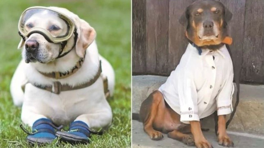 Frida se retiró este año de la Unidad Canina de la Marina.(El Universal)