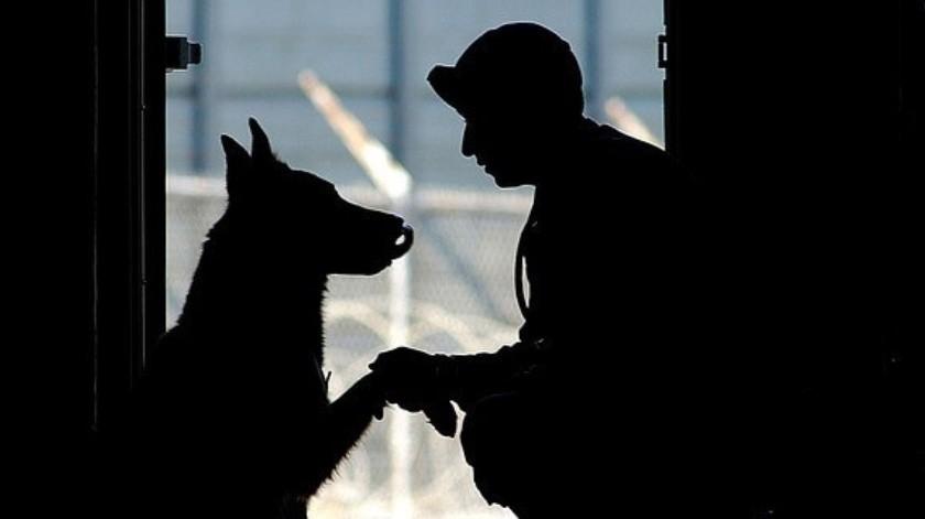 El día de hoy estamos conmemorando y ¿por qué no? celebrando el Día Mundial del Perro y por ello recordamos algunos de caninos que han marcado nuestra vida de una u otra forma(Tomada de la red)