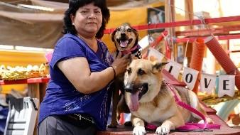 Celebran en Día del Perro