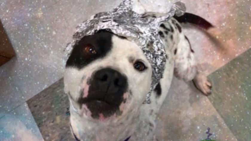 'Perros extraterrestres', un refugio saca ventaja de la fiebre por el Área 51(Cortesía)