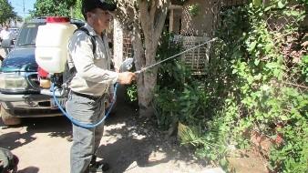 Siguen con la fumigación contra el mosquito que transmite el dengue.