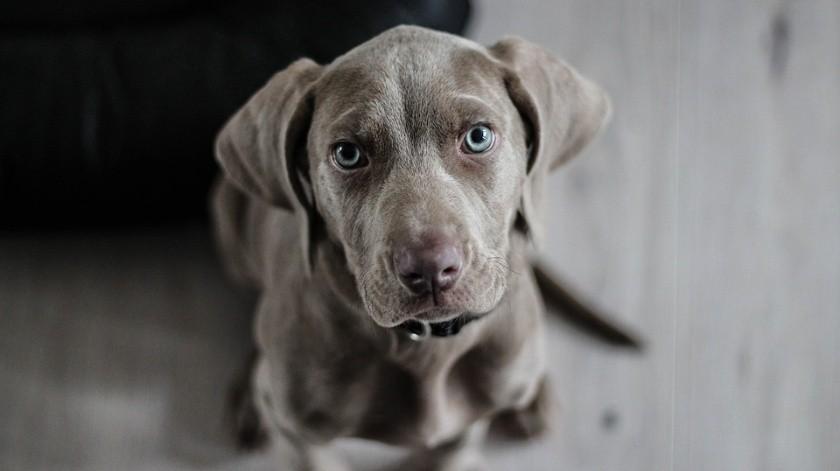 Ayuda a perros sin dueño, pero requiere apoyo con croquetas