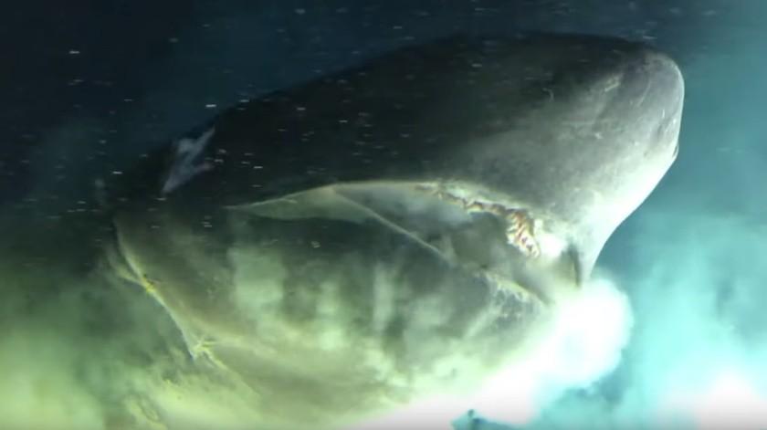 Fue captado nadando en las profundidades del Golfo de México.