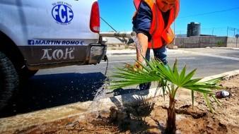 Haciendo verde a San Felipe, un árbol a la vez