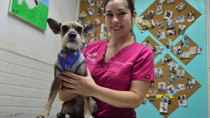 Cuidar a las mascotas necesita responsabilidad amor y compromiso(Raymundo García)