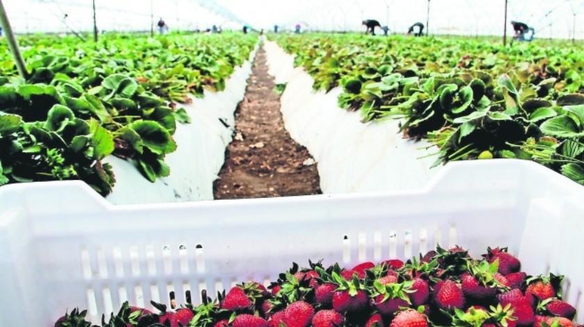 Sader presume crecimiento en exportaciones agroalimentarias(Especial)