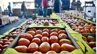 Es una posibilidad que productores decidan bajar la superficie de tomate en Sonora tras imposición de arancel.