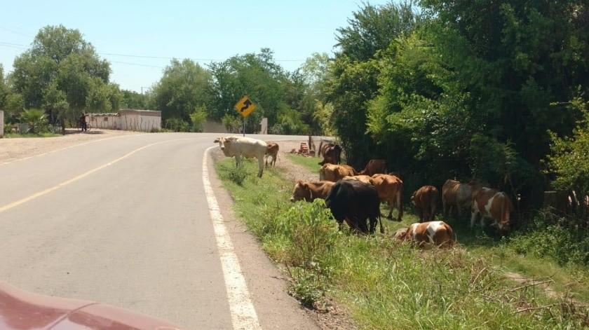 Enfrentan ganaderos del Sur crisis de agua(Jesús Palomares)