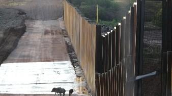 VIDEO: Científicos lanzan alerta por el muro entre EU y México