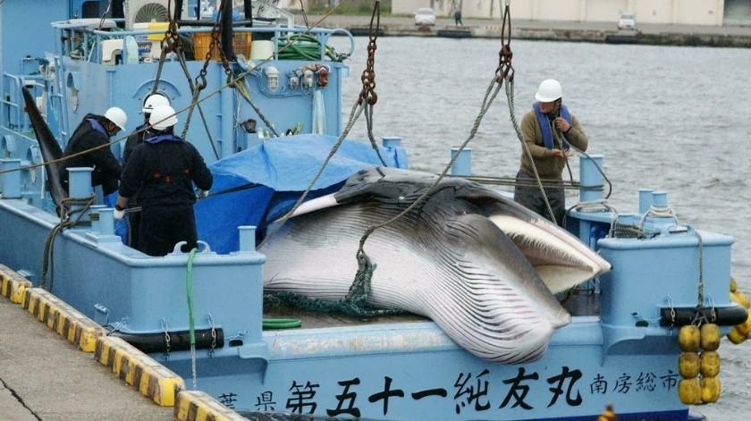 Septiembre: El mes que registra mayor caza de ballenas minke en Japón(AP)