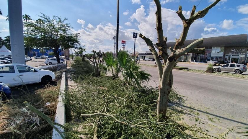 La empresa que taló los tres palo verdes en el bulevar Kinodeberá plantar 15 árboles endémicos.
