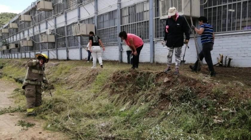 Matan a 7 crías de víbora de cascabel en escuela