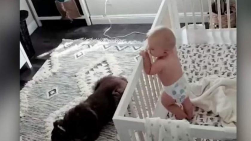Descubre que hace su perro cuando bebé llora con cámara oculta(Captura de video)