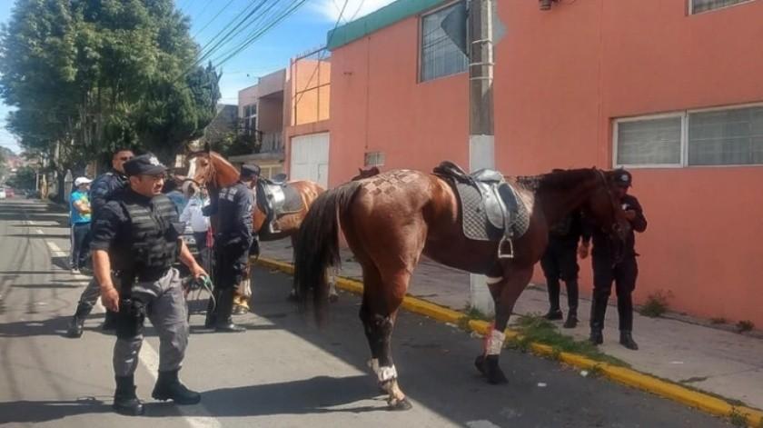 Desbocan caballos en Toluca por pirotecnia y hieren a dos mujeres(Especial)
