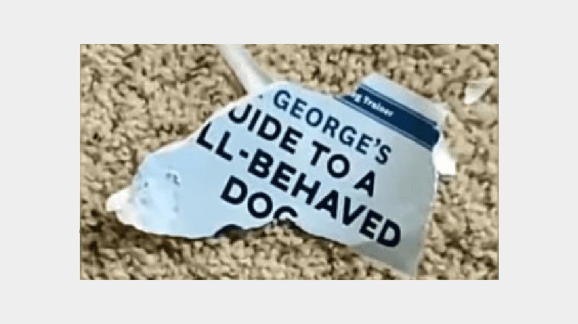VIDEO: Perro destruye libro de entrenamiento canino y se vuelve viral(YouTube)