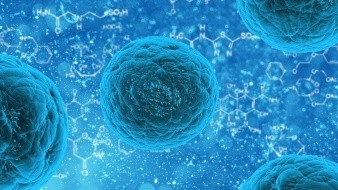 Las células cancerígenas se tornan caníbales para sobrevivir a la quimioterapia