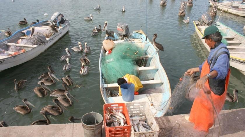 Tras un mal inicio de temporada la pesca del camarón se comienza a recuperar.(Yesicka Ojeda)