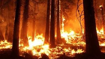 VIDEO: Condiciones climáticas dificultan lucha contra incendios en Argentina