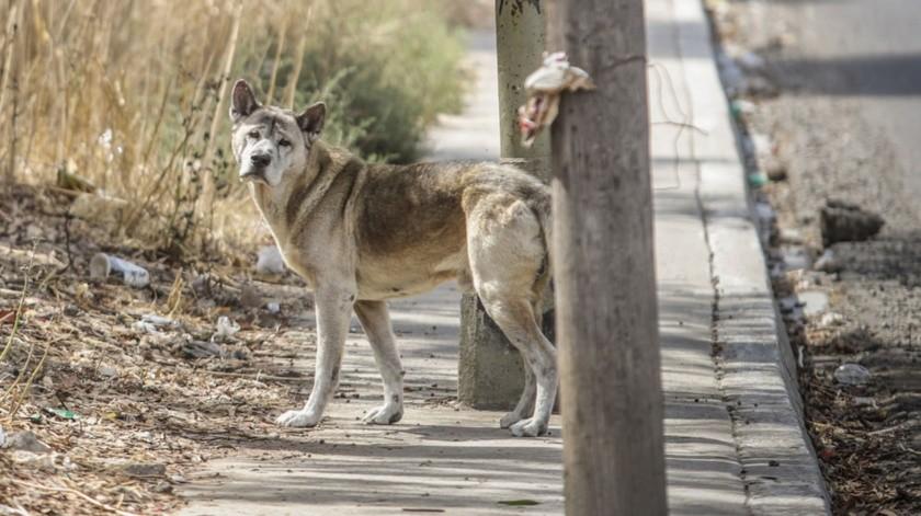 El perro ha sido adoptado por la comunidad que le lleva agua y comida.