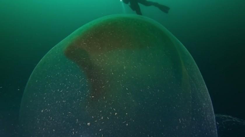 VIDEO: Descubren enorme bolsa gelatinosa con huevos de calamar(Youtube / Ronald Raasch)