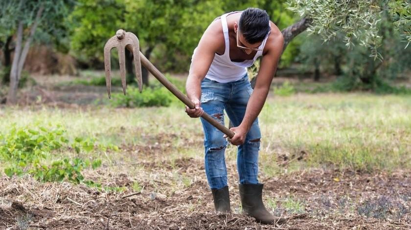 Una encuesta británica encontró que los agricultores saben cómo mantenerse ocupados, ya sea en el trabajo o entre las sábanas.(Pixabay)