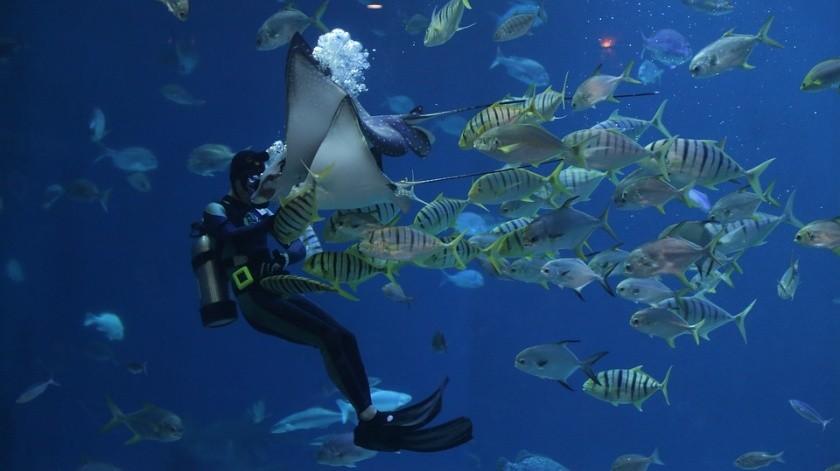 Los peces fueron capturados cerca de las costas del puerto de Veracruz, en el Golfo de México; en Puerto Morelos, en el Caribe; y en La Paz, en el Mar de Cortés.(Pixabay)