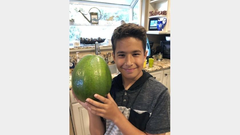 Una familia de Hawai ha ganado un lugar en los Guinness World Records por el aguacate más pesado del mundo.(AP)