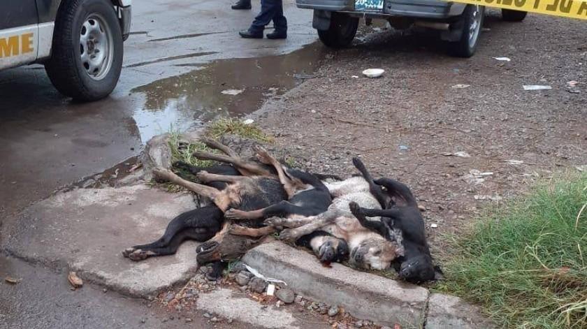 Envenenan a 5 perros en colonia de Ciudad Obregón(Mayra Echeverría)