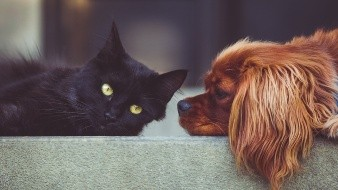 ¡Cuida con quién dejas a tus mascotas! Hacen rituales con ellas en octubre