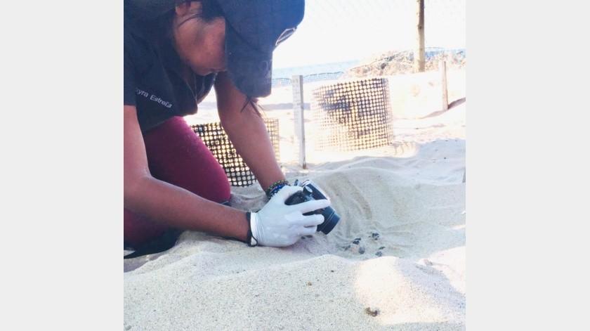Desde mayo se turnan para cuidar la anidación de las tortugas verde y golfina.