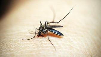 Registra BC dos casos locales de dengue