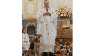Sacerdote lleva perros callejeros a misa para que encuentren un hogar