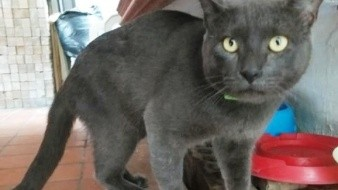 Un gato muy astuto engañó a dos familias.